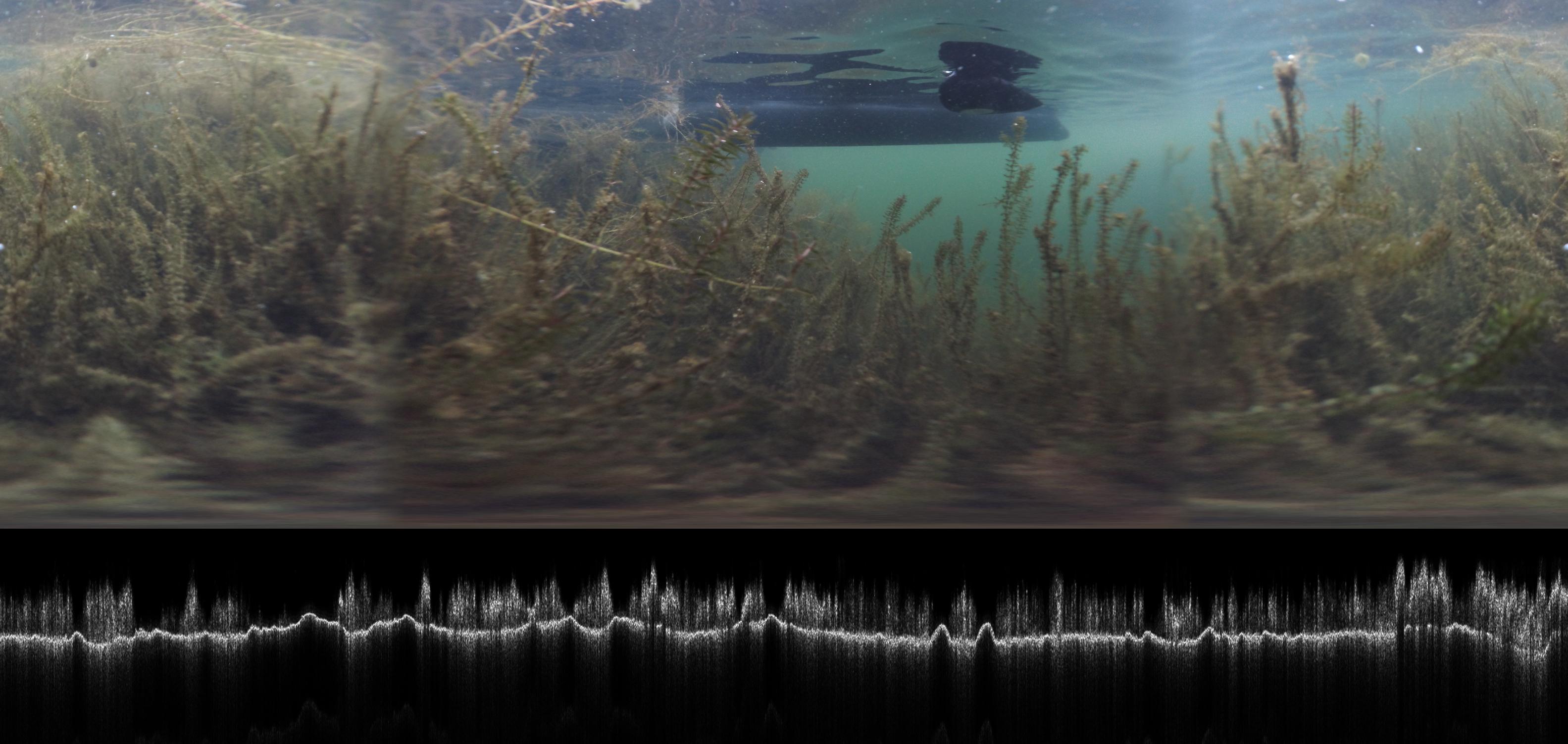 Unterwasser Foto mit Makrophyten